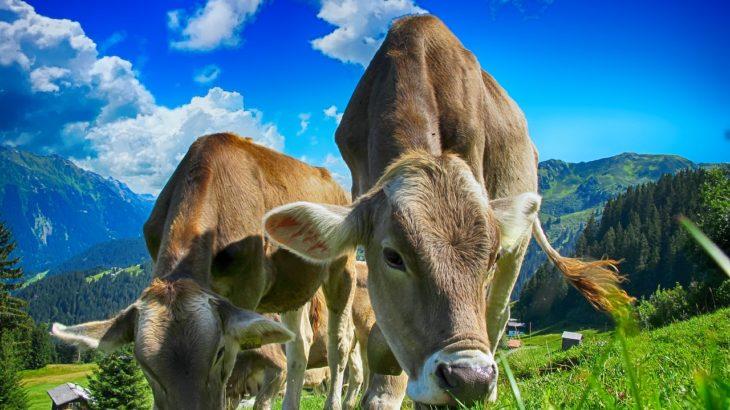 【中学受験】ニュートン算の問題2「牧草は何日でなくなる?」