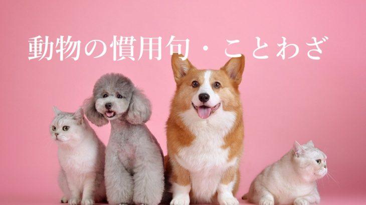 【中学・高校入試】動物の慣用句・ことわざの一覧まとめ